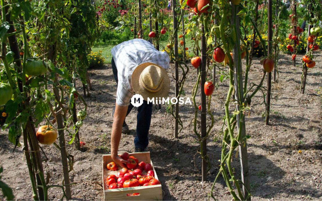 Fondsenwerving Miimosa